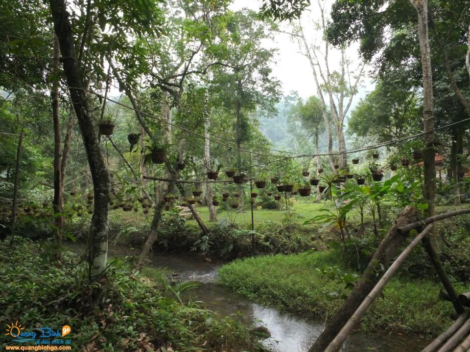 Khu du lịch vườn thực vật Phong Nha